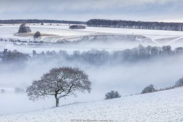 Lone tree and snow-covered fields near Ashmore, Cranborne Chase, Dorset, England, UK. January 2021