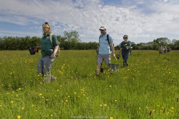 Ellie Jones of Wiltshire Wildlife Trust and a team of volunteers carrying trays and pots of Devil's bit scabious (Succisa pratensis) plant plugs for planting in a formerly farmed meadow to provide food for caterpillars of the Marsh fritillary butterfly (Euphydryas aurinia), Upper Minety Meadows reserve, Wiltshire, UK, June. Model released