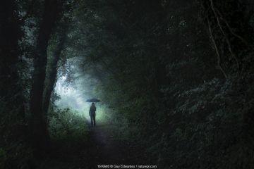Single person holding umbrella walking through dark woodland near Symondsbury, Bridport, Dorset, England, UK. August 2020