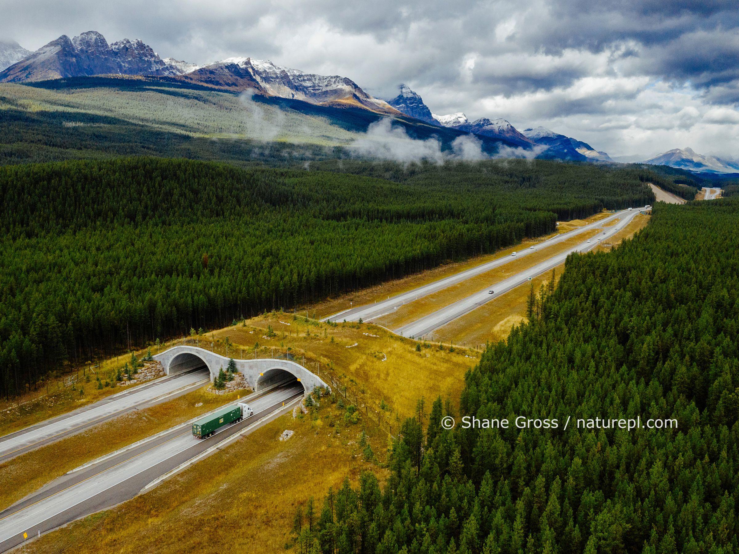 Animal crossing bridge over highway road in Banff, Alberta, Canada.