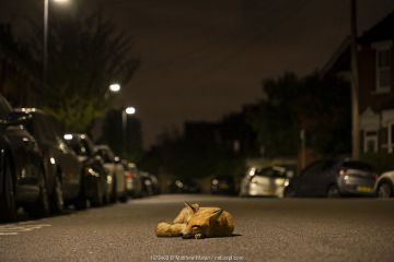 Red fox (Vulpes vulpes) resting in the road at night North London, England, UK. September