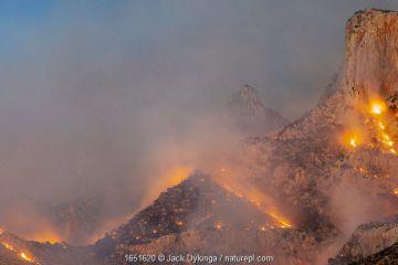 Lightning started fire in steep craggy terrain, Pusch Ridge, Santa Catalina Mountains, Coronado National Forest, Arizona, USA. 6th June 2020.