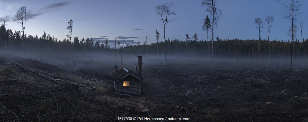 Cabin with lights on, in middle of clear-cut forest, Viken, Norway. 2021
