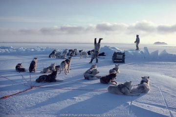Excited Inuk doing handstand on sea ice after successful hunt. Northwest Greenland, 1980.