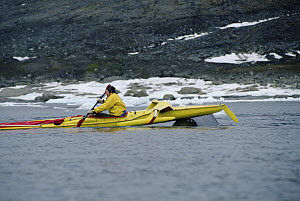 Bowhead Whale (Balaena mysticetus) noses the kayak of biologist Kerry Finley, Isabella Bay, Baffin Island, Canada - Flip Nicklin