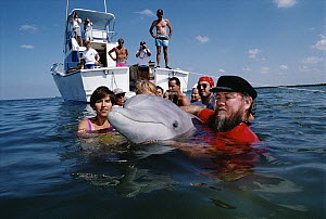 Bottlenose Dolphin (Tursiops truncatus) called Misha is released after two years of sonar study in California, Tampa Bay, Florida  -  Flip Nicklin