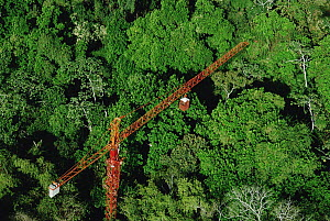 Forty meter rainforest canopy research crane used by researchers at Smithsonian Tropical Research Institute (STRI) at Parque Natural Metropolitano, Panama  -  Mark Moffett