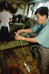 Snake is skinned alive at a Hanoi restaurant, blood, heart and genitals at right are thought to confer virility, Vietnam  -  Mark Moffett