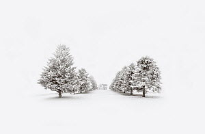 Farm house and tree-lined road in winter, Minnesota - Jim Brandenburg