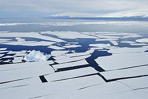 Iceberg among splitting sheets of ice, ice floes break off from ice edge in summer, McMurdo Sound, Antarctica  -  Norbert Wu