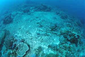 Coral reef damaged by dynamite fishing has not recovered in 20 years, Similan Islands, Thailand  -  Norbert Wu