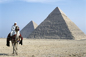 Camel and rider in front of the Pyramids at Giza, Cairo, Egypt - Norbert Wu