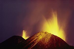 Volcanic eruption, radial flank fissure, February 1979, lava fountaining from splatter cone at dusk, Cerro Azul, Isabella Island, Galapagos Islands, Ecuador - Tui De Roy