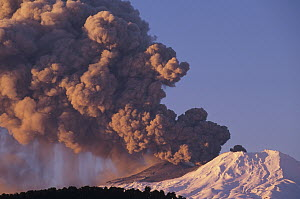Mt Ruapehu eruption 1996, highest volcano on North Island, Hakone, Tongariro National Park, New Zealand  -  Tui De Roy
