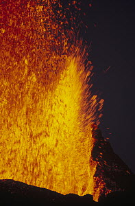 Lava fountains from eruptive vent along radial fissure on flank of shield volcano, February 1995, Fernandina Island, Galapagos Islands, Ecuador - Tui De Roy