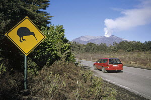 Department of Conservation places warning road signs in an effort to minimize road kills of endangered national bird, Tongariro National Park, New Zealand  -  Tui De Roy