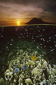 Sunset with hard corals and small reef fish just beneath the water's surface at Bunaken Island, Manado Tua Marine National Park, Indonesia - Fred Bavendam