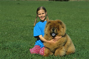 Chow Chow (Canis familiaris) young girl hugging red dog  -  Mark Raycroft