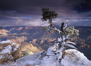South Rim of Grand Canyon with a dusting of snow seen from Yaki Point, Grand Canyon National Park, Arizona  -  Tim Fitzharris