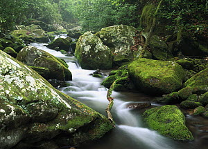 Roaring fork river, Great Smoky Mountains National Park, Tennessee  -  Tim Fitzharris