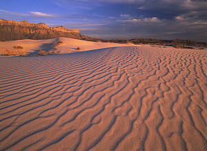 Gypsum dunes, Guadalupe Mountains National Park, Texas  -  Tim Fitzharris