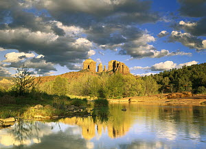 Cathedral Rock reflected in Oak Creek at Red Rock crossing, Red Rock State Park near Sedona, Arizona  -  Tim Fitzharris