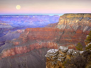 Full moon over the Grand Canyon at sunset as seen from Pima Point, Grand Canyon National Park, Arizona  -  Tim Fitzharris