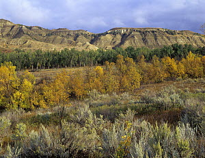 Autumn in Theodore Roosevelt National Park, North Dakota  -  Tim Fitzharris