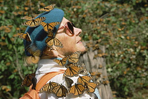 Monarch (Danaus plexippus) butterfly group perching on a female tourist, El Rosario Monarch Butterfly Sanctuary, Mexico - Thomas Mangelsen