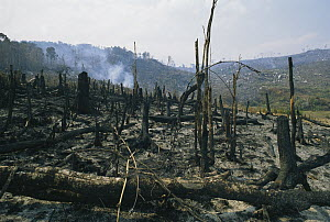 Slash and burn rainforest destruction, Madagascar - Konrad Wothe