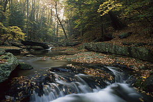 Small waterfall on hunting creek in fall, eastern hardwood forest, Catoctin Mountain Park, Maryland  -  Gerry Ellis
