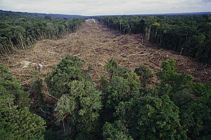 Clearing of tropical rainforest south of Lake Kutubu for Gobe oil camp, Papua New Guinea  -  Gerry Ellis