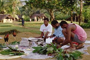 Botanists from Papua New Guinea record specimens from plant survey in Kikori Basin, WWF ICDP 1995, Omo Village, Papua New Guinea  -  Gerry Ellis