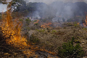 Tavy, the local name for slash and burn agricultural practices, used by locals to prepare soil for planting or grazing, northeast Madagascar - Pete Oxford