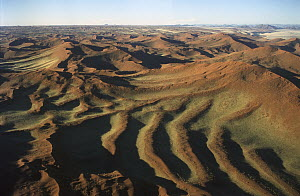 Aerial view of sand dunes after a good rain year near Sossusvlei, Namibia  -  Pete Oxford