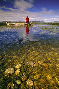 Lake Titicaca Frog (Telmatobius culeus) the world's largest aquatic frog, swimming in foreground with researchers in a canoe in background at Lake Titicaca, Andes Mountains, Bolivia and Peru, critical...  -  Pete Oxford