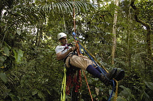 Biologist Alexander Blanco 40 meters up a Kapok tree preparing to set a trap to catch a recently fledged seven month old wild Harpy Eagle (Harpia harpyja) chick to put a GPS transmitter on it, Amazon...  -  Pete Oxford