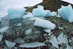 Tourist photographing icebergs and bergy bits on Brown Bluff Beach near Hope Bay, Antarctic Sound, Antarctica  -  Colin Monteath