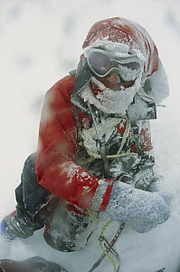 Climber in severe blizzard attempting to cross Ernest Shackleton's route, South Georgia Island  -  Colin Monteath