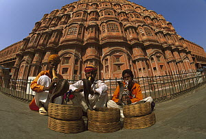 Snake charmers with Cobras (Naja sp) in front of Palace of the Winds, Jaipur, Rajasthan, India  -  Colin Monteath