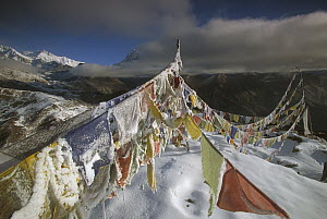 Iced up prayer flags, Dzong Ri, 8595 meters, Kangchenjunga in distance, most easterly of the world's fourteen 8000 metre peaks, Sikkim Himalaya, India  -  Colin Monteath