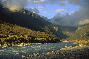 Copland River above Welcome Flats, Westland National Park, New Zealand  -  Nick Groves