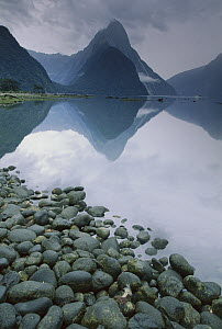 Milford Sound on a calm misty morning, Fiordland National Park, New Zealand  -  Nick Groves