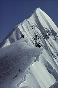 Climber soloing the summit of Mount Cook, Grand Traverse, Mount Cook National Park, New Zealand  -  Nick Groves