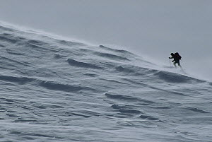 Skiing hiker in the wind, Southern Alps, New Zealand  -  Nick Groves