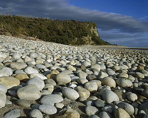Thousands of rounded granite boulders on the beach at the mouth of the Waitutu River, Fiordland National Park, New Zealand  -  Harley Betts