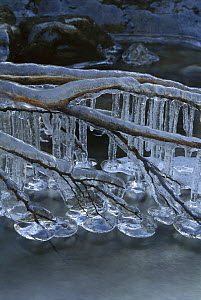 Branch covered by ice and icicles hanging over stream, New Zealand  -  Shaun Barnett