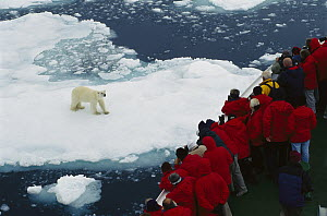 Polar Bear (Ursus maritimus) watched by tourists on eco-tourism ship, Arctic  -  Ingrid Visser