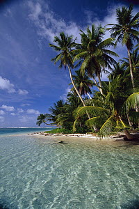 Beach and palms, Ifalik Island, Papua New Guinea  -  Ingrid Visser