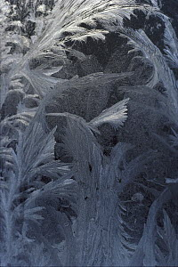 Frost patterns on window, Copland Valley, New Zealand  -  Ian Whitehouse